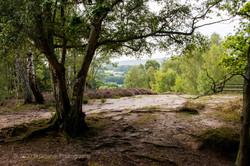 Brianseye Landscape (124)