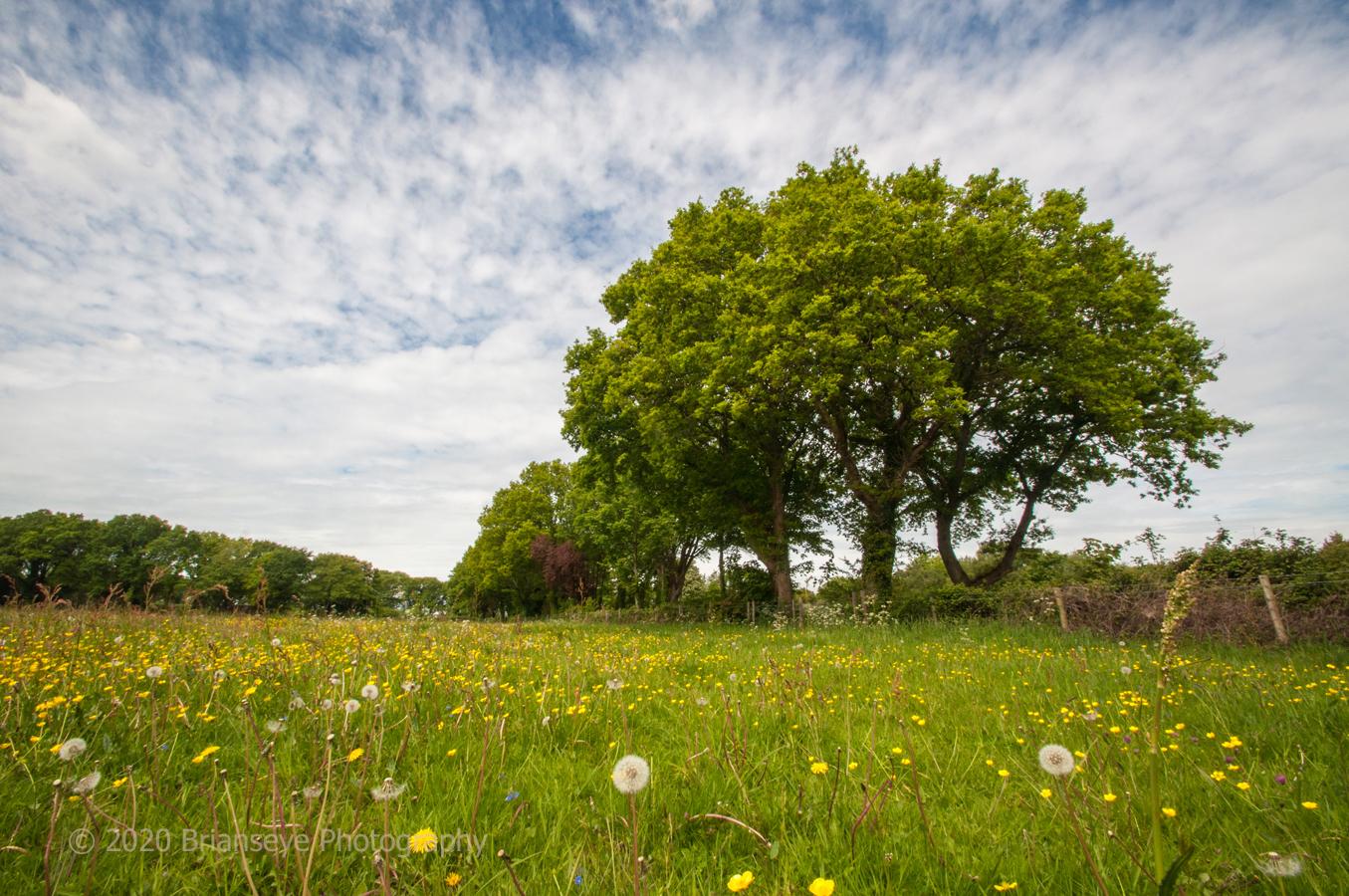 Brianseye Landscape (61)