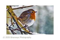 Winter Robin - sm card