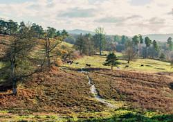 Brianseye Landscape (89)