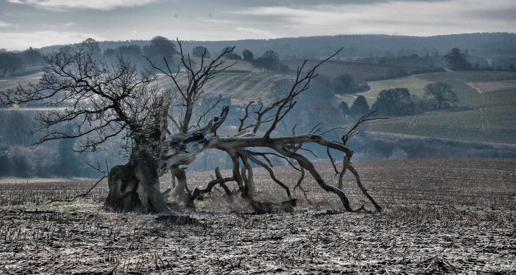 Brianseye Landscape (70)