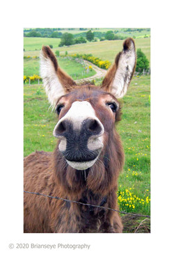 Donkey sm card