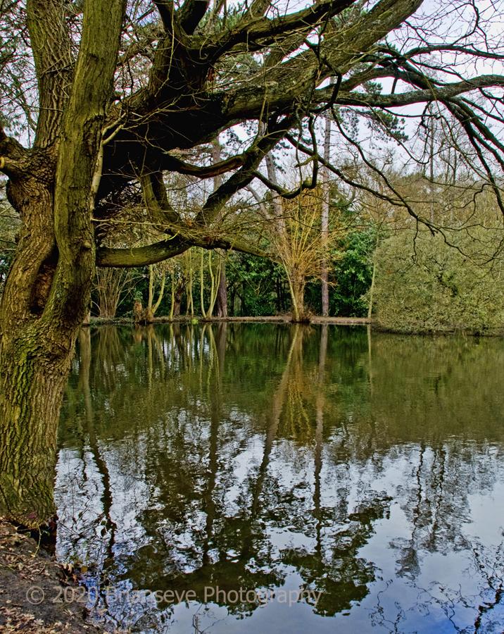 Brianseye Landscape (24)