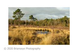18. RSPB pond 1-card