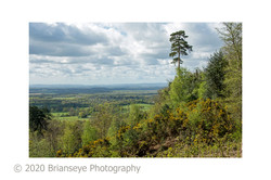 View from Holmbury Hill sm card-2