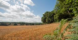 Brianseye Landscape (65)