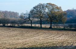 Brianseye Landscape (82)