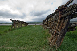 Dead boats at Purton on Severn-1