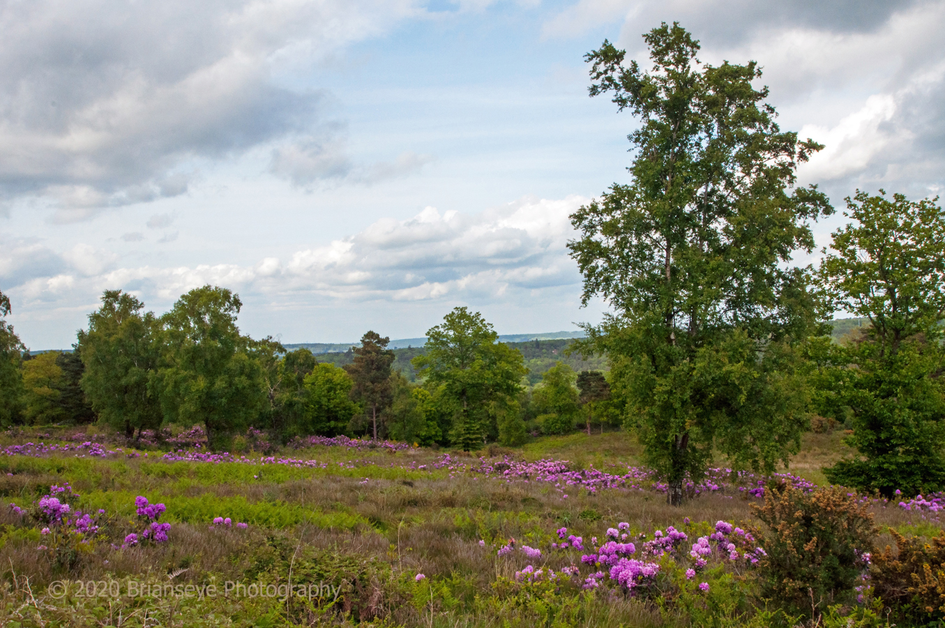 Brianseye Landscape (64)