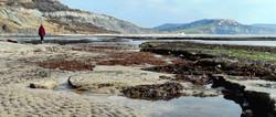 Dorset 20111