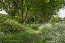 Brianseye Landscape (63)