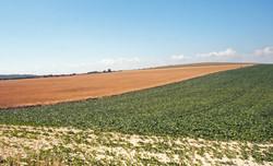 Brianseye Landscape (104)