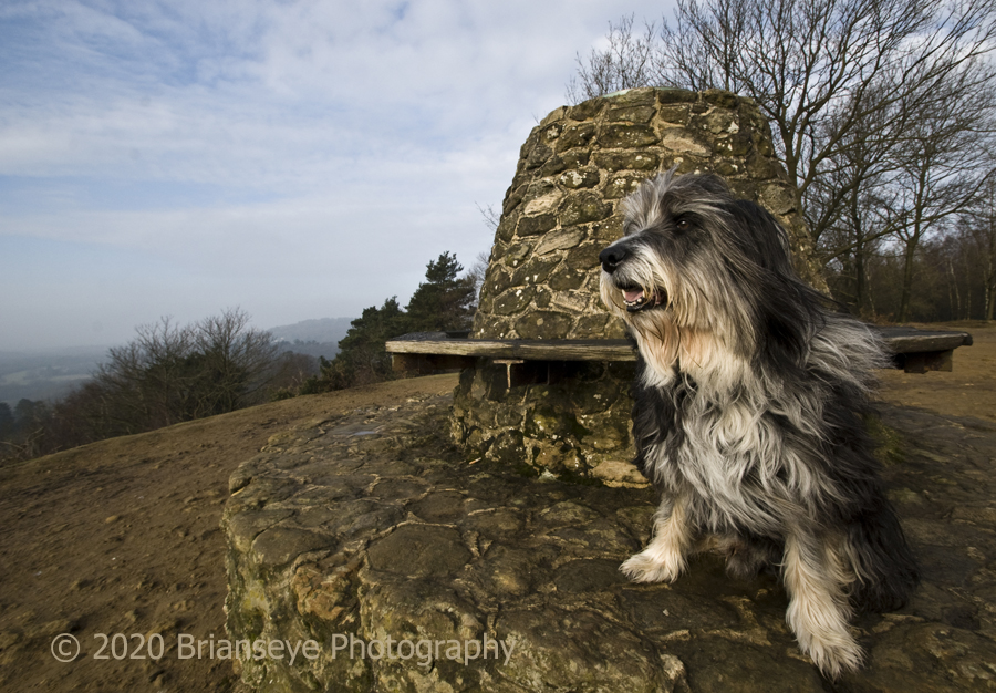 Another one of Robbie on Holmbury Hill