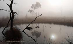 Brianseye Landscape (133)