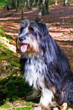 Robbie in his favourite woods - The Hurtwood in The Surrey Hills