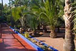 Marjorelle Gardens Marrakech