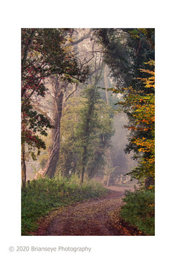 Broadfiled Road in Autumn-card