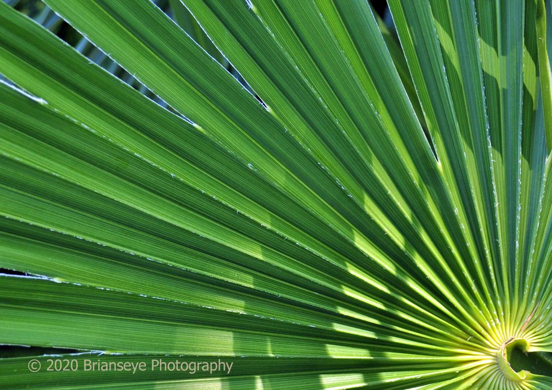 Exotic fern