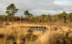 Brianseye Landscape (114)