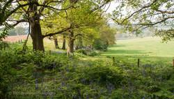 Brianseye Landscape (83)