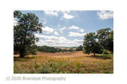 Aview from Abinger Roughs - card