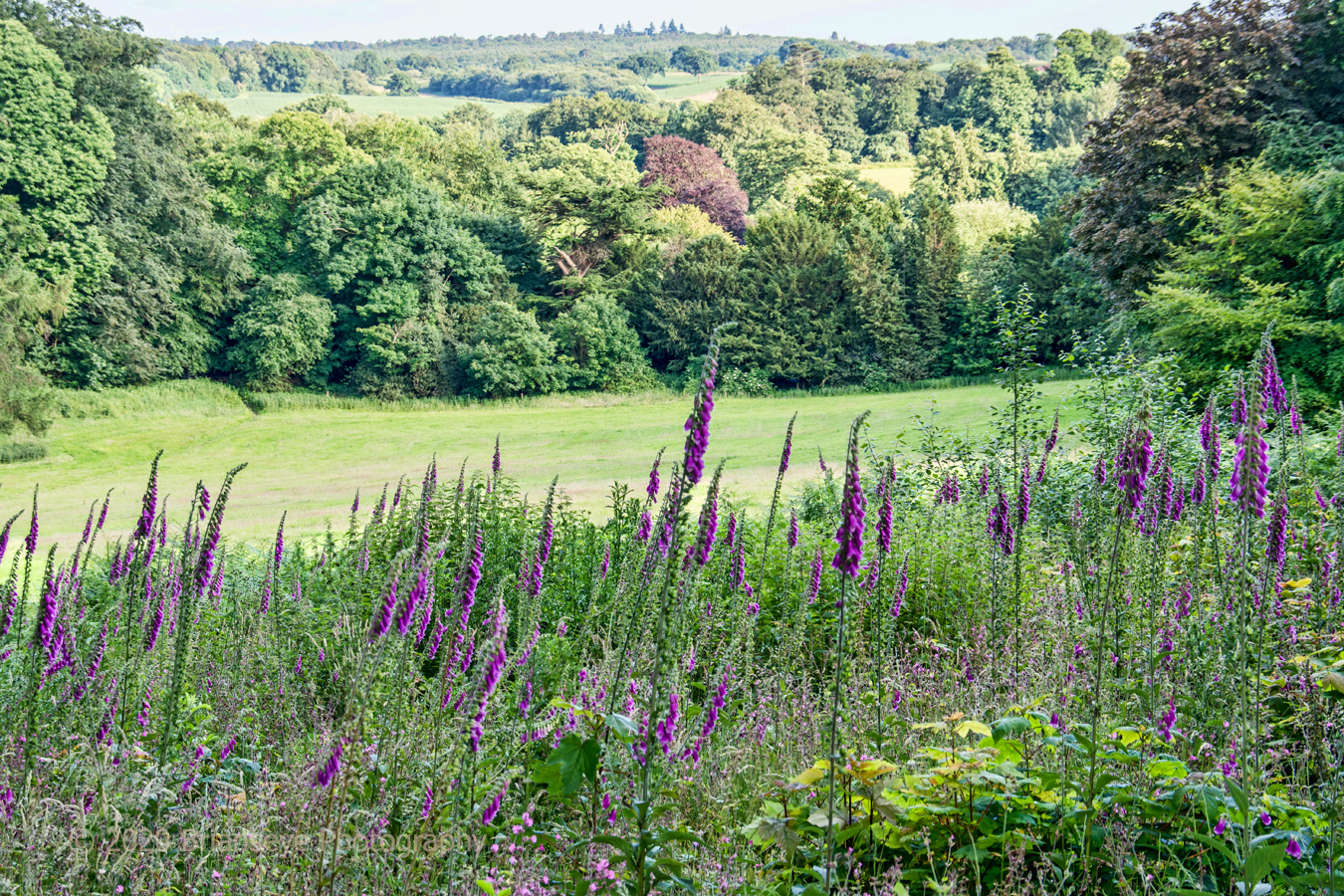 Brianseye Landscape (76)