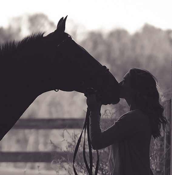 Equine Coaching or Counselling Session
