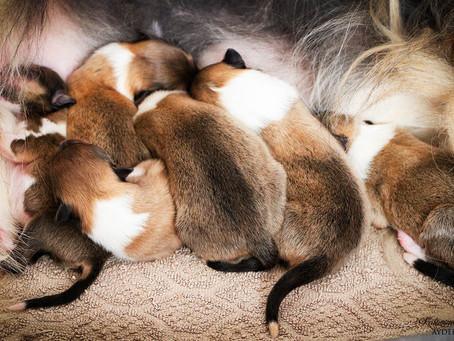 We have puppies - Imamo mladičke!