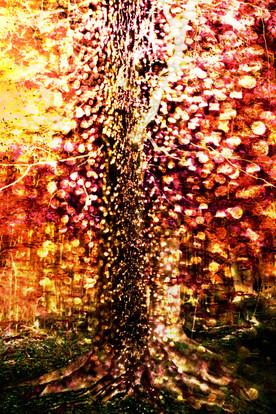 light tree s.jpg
