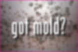 got-mold.png