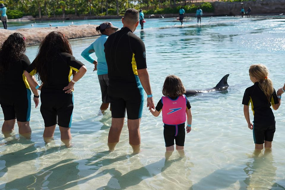 Dip 'N Discover at Dolphin Cay