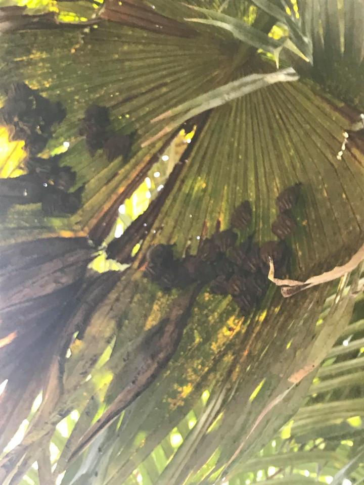 bats in costa rica