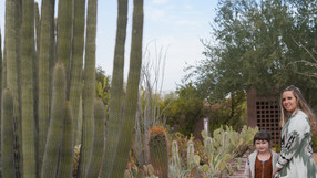 Desert Botanical Gardens in Arizona