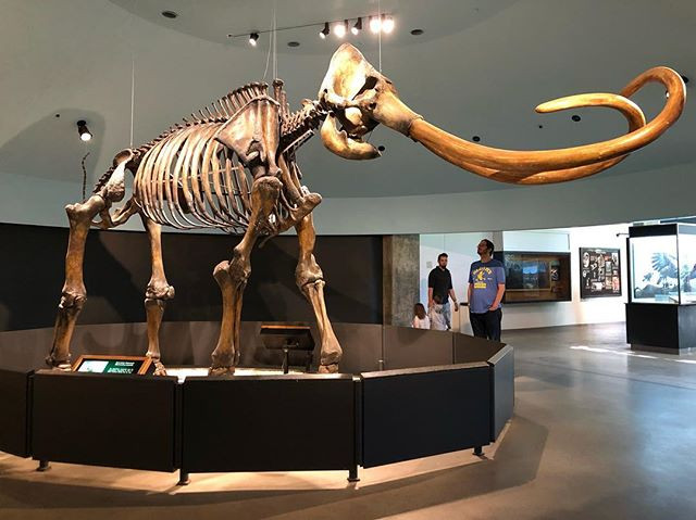 skeletons at La Brea Tar Pits