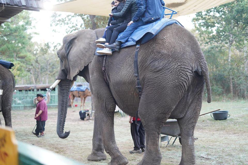 Elephants at Texas Renaissance Festival