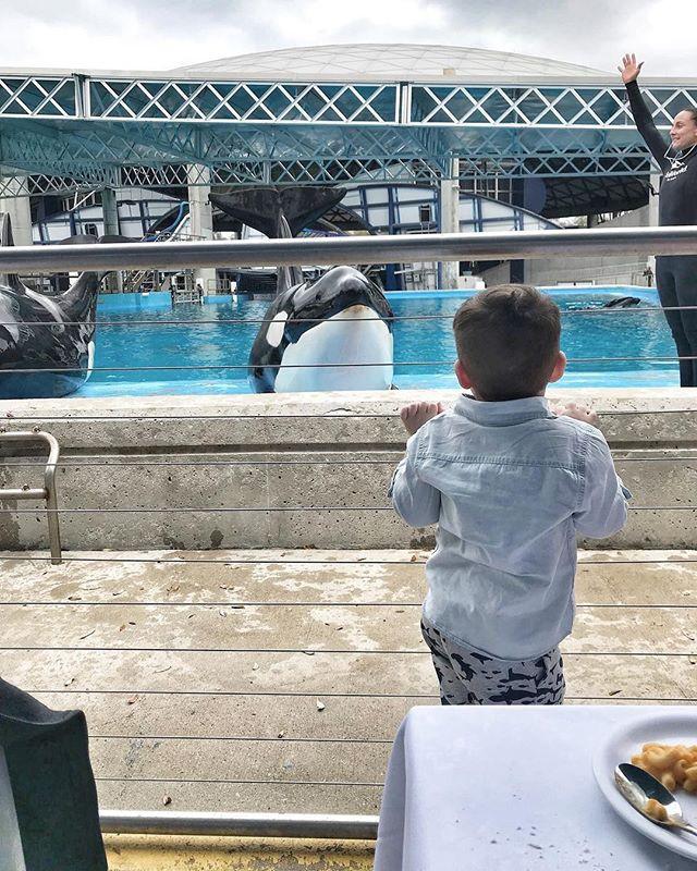 killer whales at Sea World