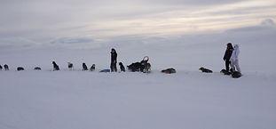 Hundekjøring flere dager Hardangervidda