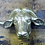 Thumbnail: Buffalo Head