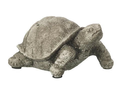 Terence Tortoise