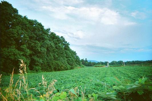 Hadley Grass