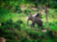 profundas selvas del norte de Tailandia
