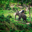 Deep jungles of North Thailand