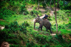 Deep jungles of North Thailand