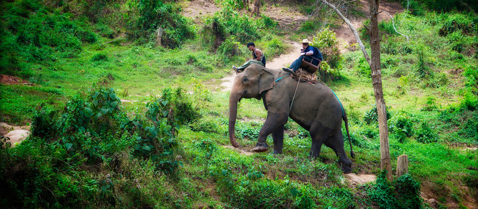 From the Jungles of Northern Thailand – Chiang Dao