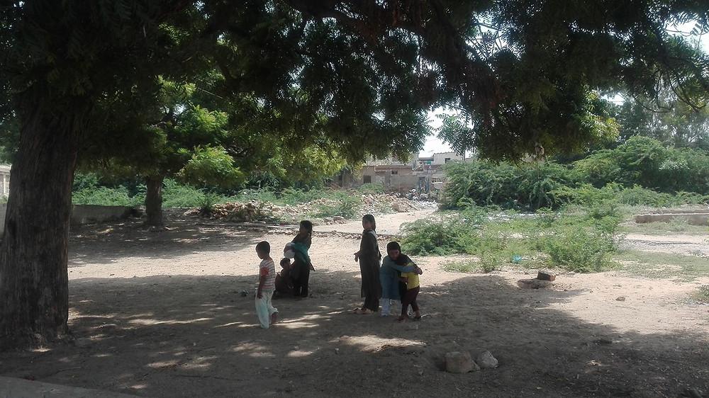 Neem tree in Manghopir