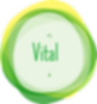 3-vital-participatory_design.png