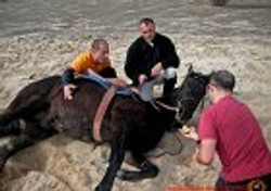 Carreno_stunts_caballos_00