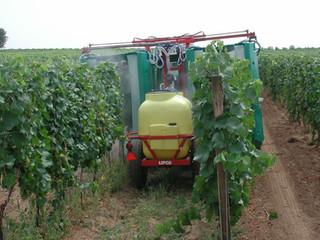 Wein und Pestizide – Warum Bio-Wein die richtige Wahl ist