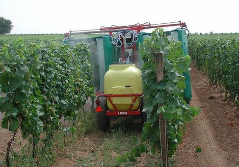 Pestizide im Weinberg