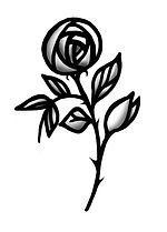 DD rose.jpg